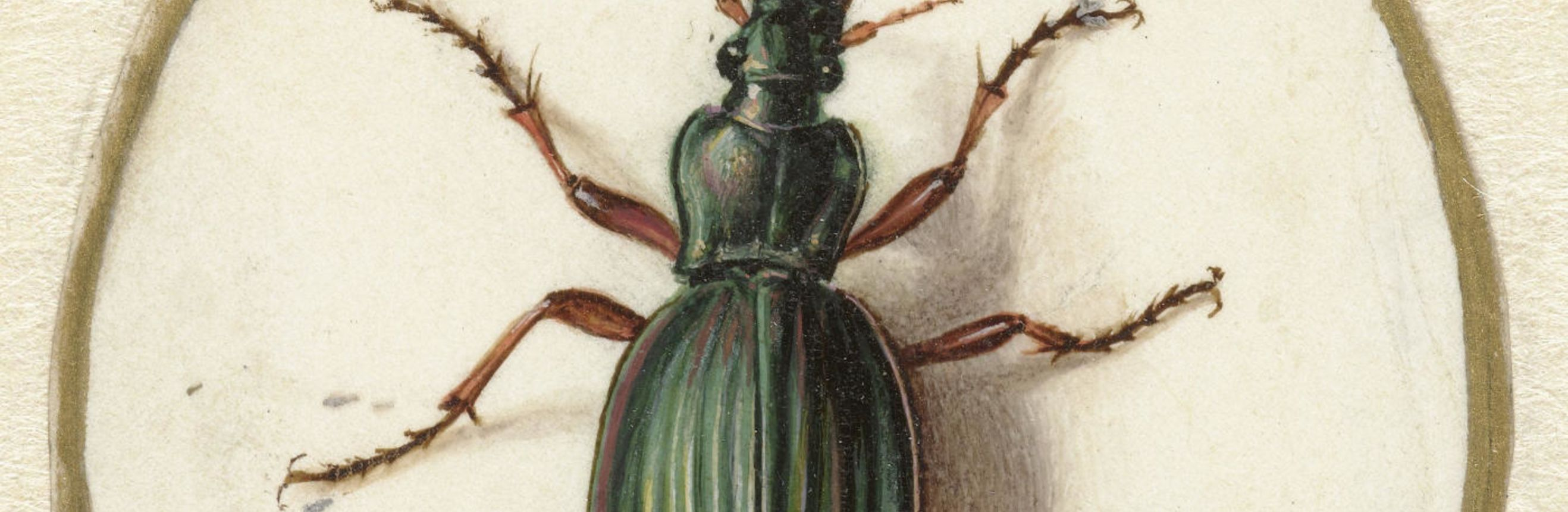 The cover for the Standard Ebooks edition of The Beetle, by Richard Marsh